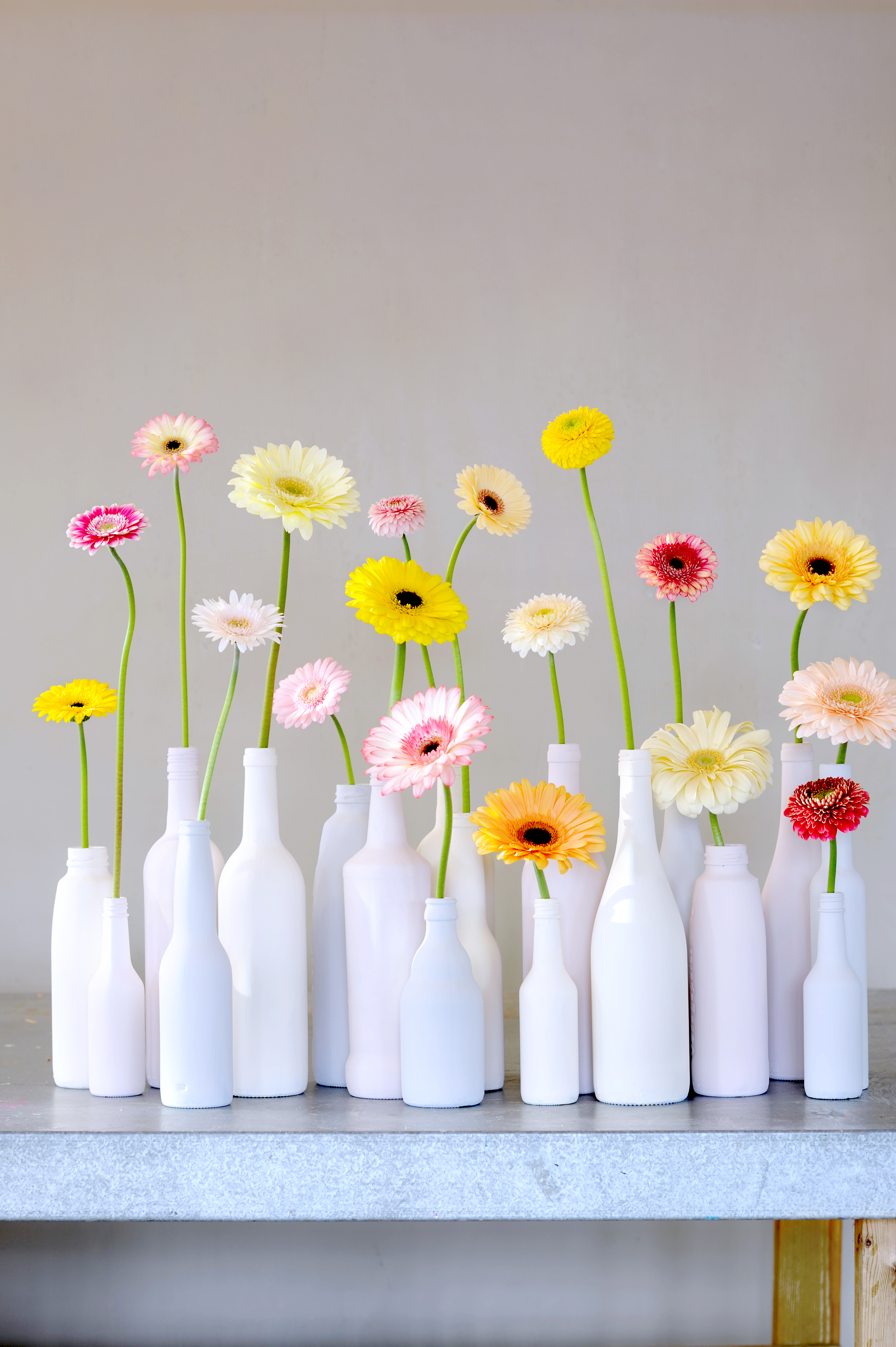 Make the most of your gerberas funny how flowers do that - Articulos de hogar baratos ...