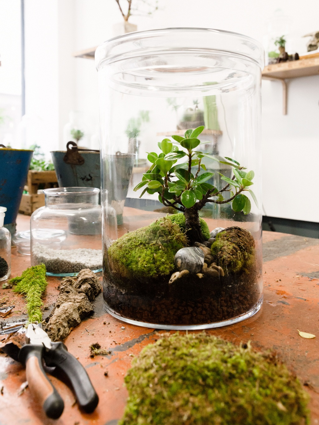 Make your home greener with terrariums funny how flowers for Aquarium bocal