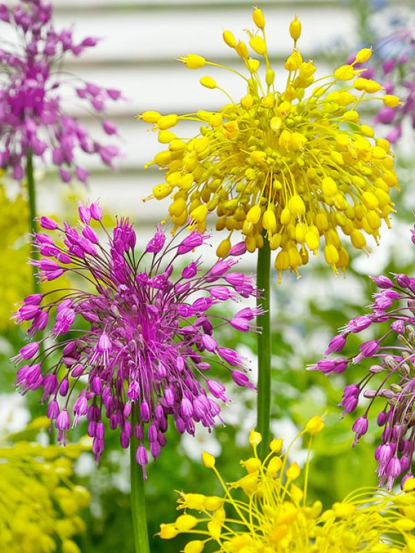 Celebrate Bonfire Night With Firework Inspired Flowers Funny How