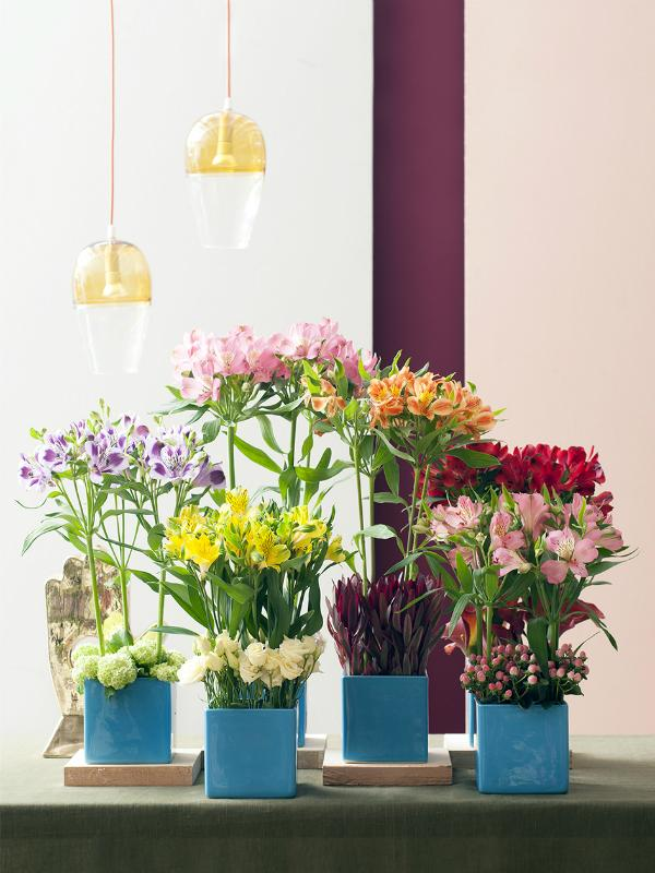 Celebrate your friendship with Alstroemeria Funnyhowflowersdothat.co.uk