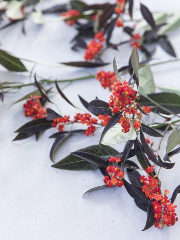 Euphorbia Funnyhowflowersdothat.co.uk