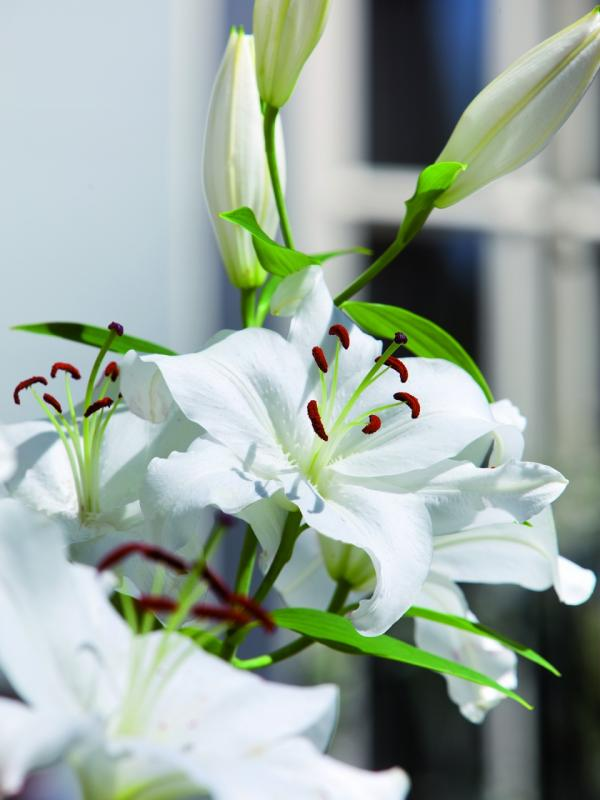 A lovely gesture with lilies Funnyhowflowersdothat.co.uk