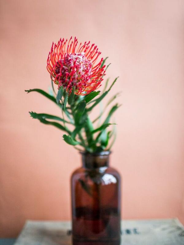 Pincushion | Funny how flowers do that