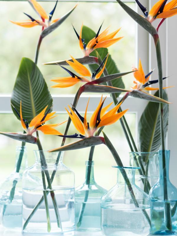 Strelitzia Funnyhowflowersdothat.co.uk