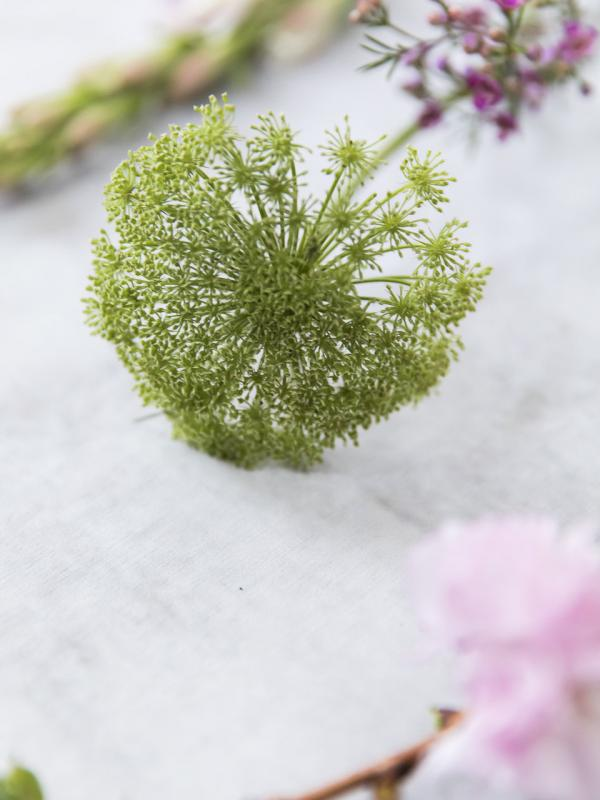 Dill Funnyhowflowersdothat.co.uk