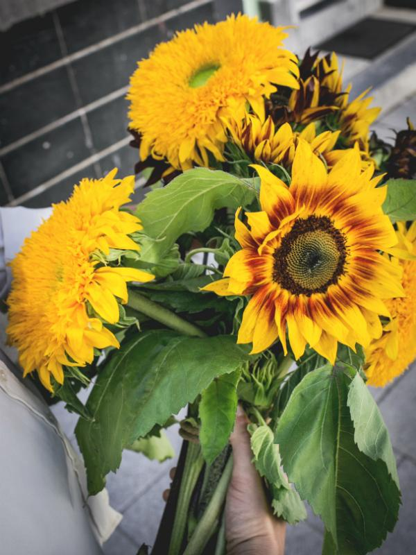 The most unusual forms of the sunflower Funnyhowflowersdothat.co.uk